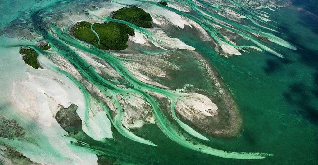 Barracuda Keys, Archipel des Keys, Floride, États-Unis (24°43' N - 81°38' O). Au nord-est de Key West, la capitale de ce petit archipel corallien, ces îlots inhabités couverts de mangroves sont nés de l'accumulation de sables coralliens grâce au jeu incessant des vagues et des courants du détroit de Floride qui relie l'océan Atlantique au golfe du Mexique, combiné au passage certaines années des cyclones dont les ondes de tempête peuvent les submerger complètement. © Yann Arthus-Bertrand - Tous droits réservés