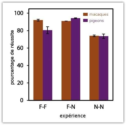 Pourcentage de réussite au cours des tests pour les pigeons (violet), comparé à celui des macaques pendant l'expérience de 1998 (orange). Au cours de ces expériences, les animaux ont dû ordonner, dans l'ordre croissant, deux lots comportant un nombre de symboles compris entre 1 et 9. Trois séries d'expériences : les deux lots à ordonner sont connus des animaux (F-F) ; un seul des deux lots à ordonner est connu (F-N) ; les animaux ne sont familiers avec aucun des deux lots (N-N). © Scarf et al. 2011, Science - adaptation Futura-Sciences