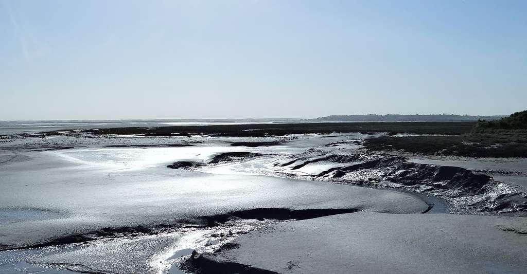 Baie de Somme. © Ibex73, Wikimedia, CC by-sa 4.0