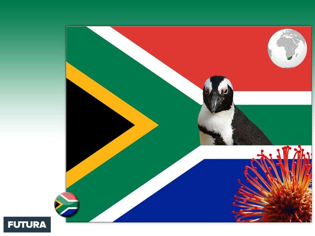 Drapeau : Afrique du Sud