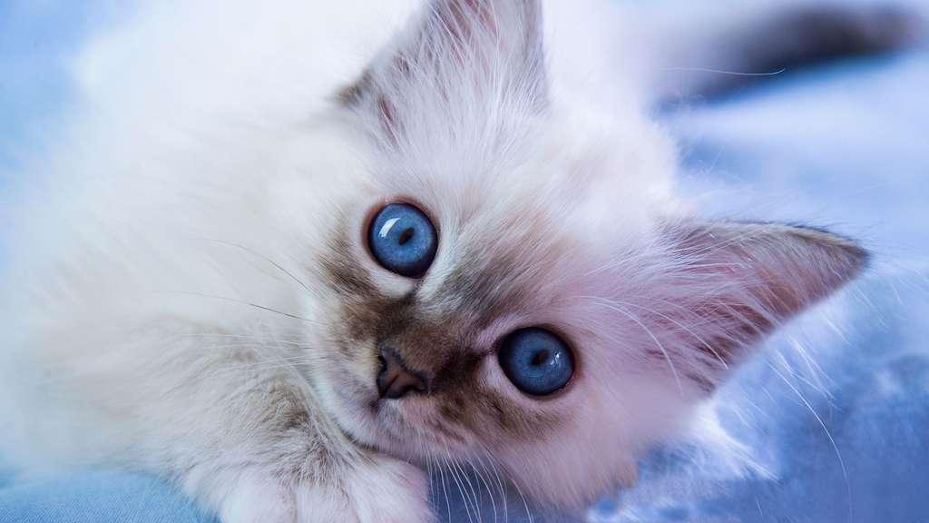 Un chaton à câliner