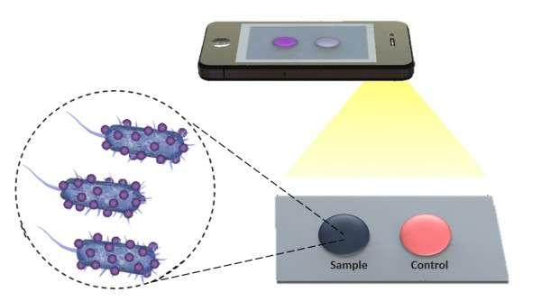 Une application pour mobile utilise une goutte de sang pour détecter des bactéries, grâce à des images prises par le téléphone et qui peuvent être analysées à distance. © Florida Atlantic University