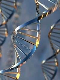 L'ADN peut aujourd'hui permettre d'identifier des personnes, victimes ou coupables. © IRH/unicef.fr