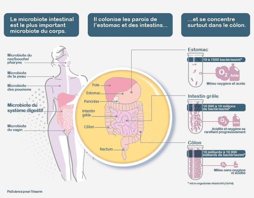 Le microbiote est propre à chaque individu. © PixScience pour l'Inserm