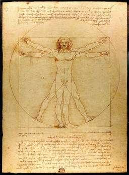 L'homme de Vitruve, de Léonard de Vinci. © Luc Viatour