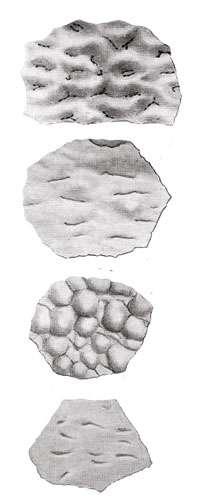 Fragments de coquilles d'œufs de grands oiseaux (peut-être Gastornis) de l'Éocène inférieur de Provence. © Société géologique de France