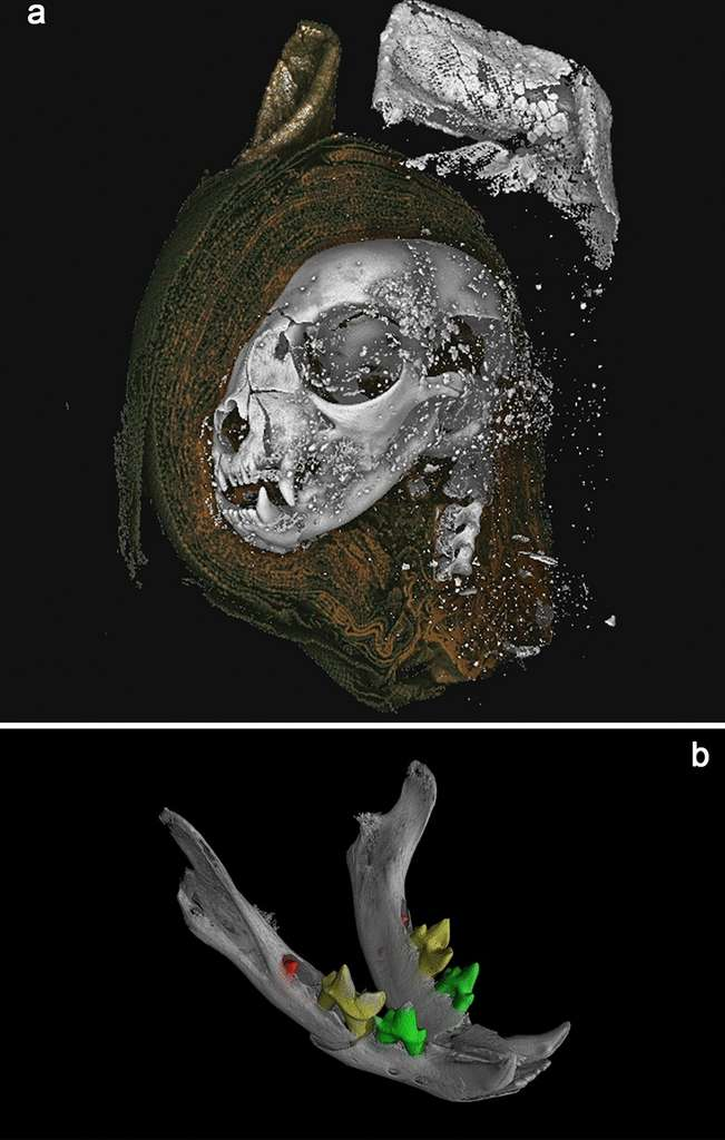 Visualisation en 3D de la tête du chat momifié. © Université de Swansea