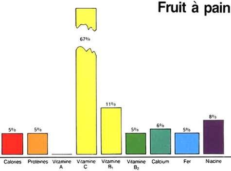 Apports énergétiques du fruit de l'arbre à pain. © DR
