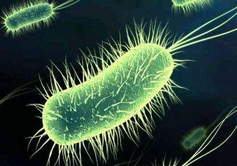 Des bactéries intégrées sur des robots, de la science-fiction ? © DR