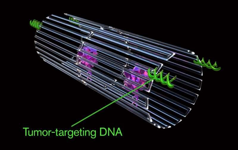 Les nanorobots tueurs de tumeurs se présentent sous la forme d'une feuille d'ADN enroulée autour d'une enzyme appelée thrombine (en violet). Ils la libèrent lorsque des récepteurs à leur surface (en vert) détectent la signature moléculaire des cellules cancéreuses. © ASU Biodesign Institute