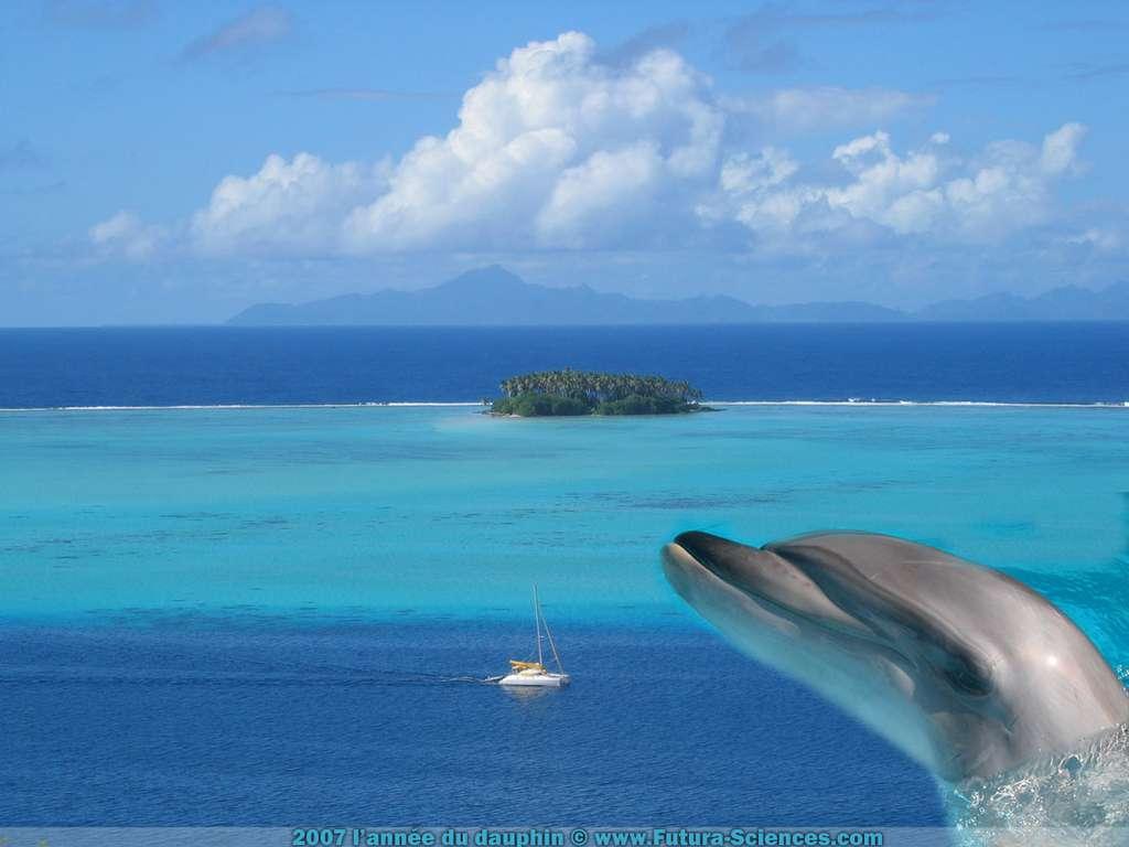 2007 l'année du dauphin