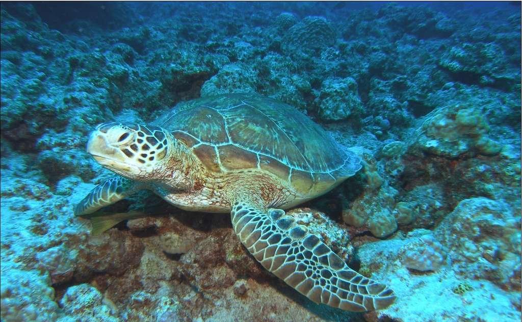 L'archipel d'Okinawa regorge d'une faune et d'une flore sous-marine des plus impressionnantes. © JNTO