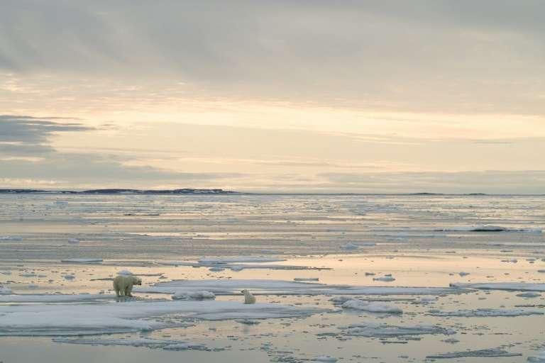 Photo transmise 17 juillet 2020 par Polar Bears International d'un ours polaire et de son ourson photographiés en 2012 près de l'archipel de Svalbard (Norvège). © Kt Miller, Polar Bears International, AFP, Archives