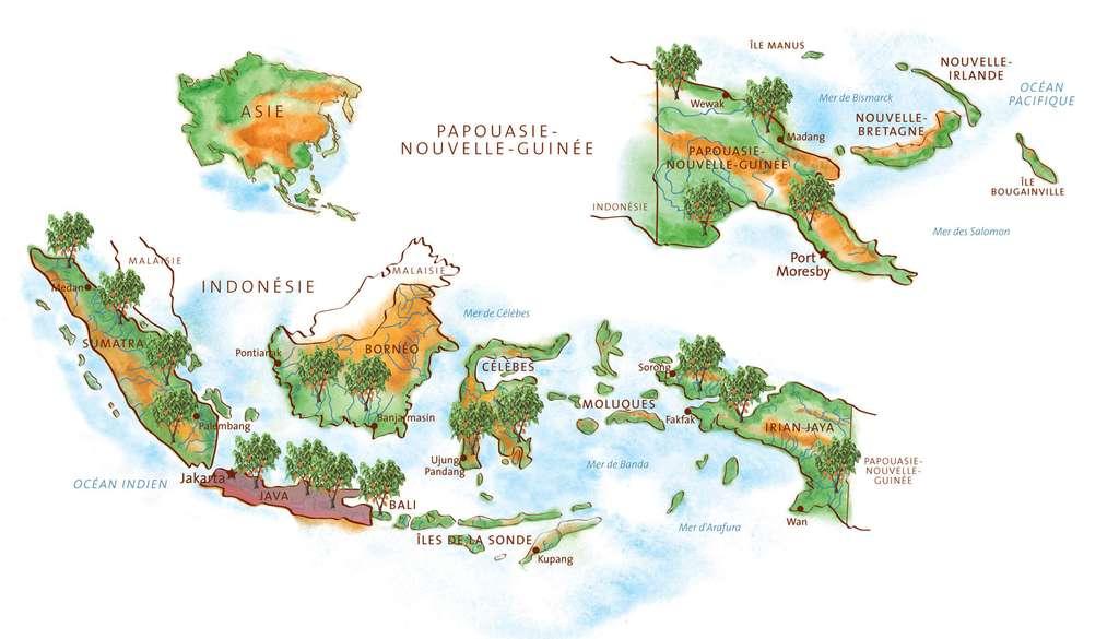 La production de cacao fin en Asie, de Java à la Papouasie-Nouvelle-Guinée. © Gwendolin Butter