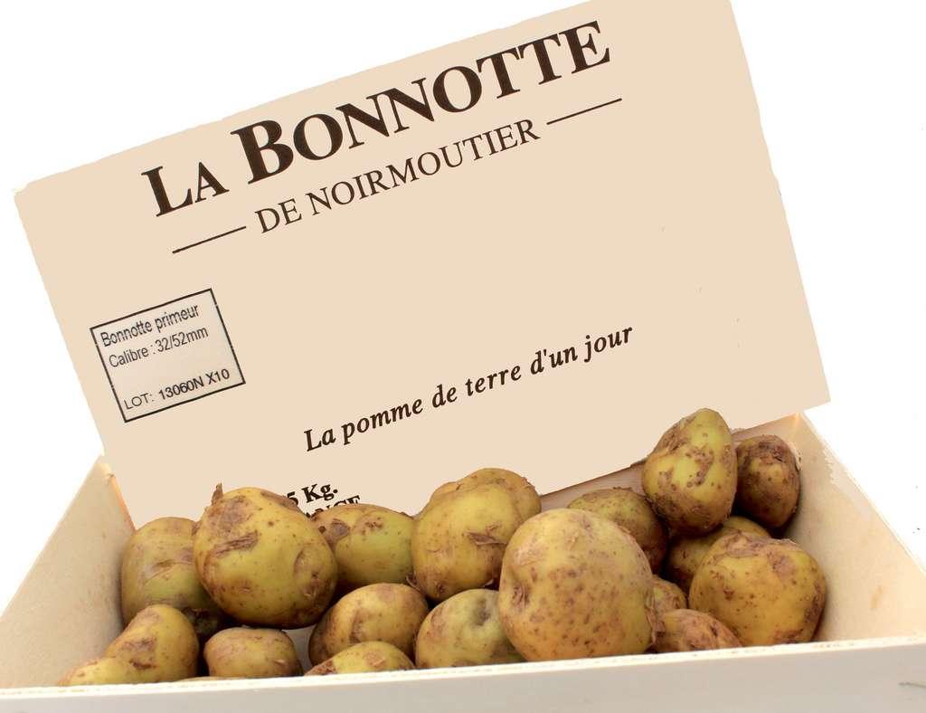 Réintroduite dans les années 1990 et récoltée à la main, la Bonnotte est la star de l'île de Noirmoutier.