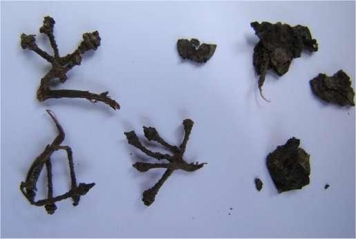 Des restes de grappes (les rafles, la partie ligneuse) et de raisins pressés retrouvés dans la grotte arménienne étaient là depuis 6.000 ans. © Gregory Areshian