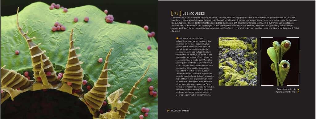Les mousses sont des plantes primitives. Sous l'œil du microscope électronique, elles se révèlent en toute poésie. © Giles Sparrow/Dunod