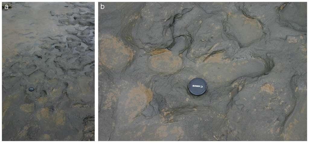 Le sol devait être boueux, ce jour-là. Il a ensuite séché puis a été recouvert par la sédimentation. Ce genre de traces est très rare et précieux pour les paléontologues. © Nick Ashton et al., Plos One