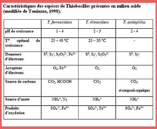 Tableau Thiobacilles