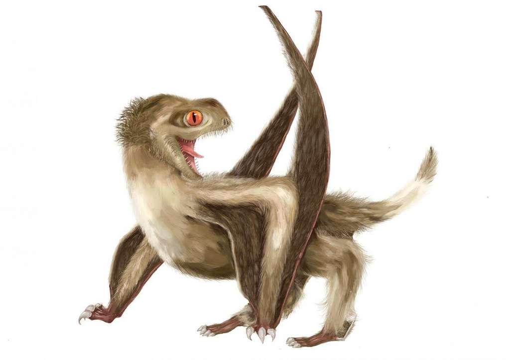 Une reconstitution du ptérosaure étudié avec ses quatre types de plumes différents. © Yuan Zhang, Université de Nankin