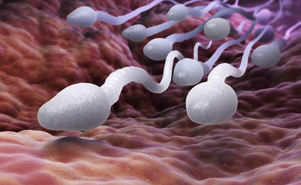 Le dispositif permet d'évaluer le nombre de spermatozoïdes et leur motilité. © Tatiana Shepeleva, Fotolia