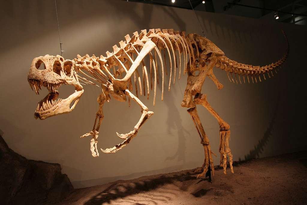 L'Afrovenator, le dinosaure carnivore le plus complet d'Afrique