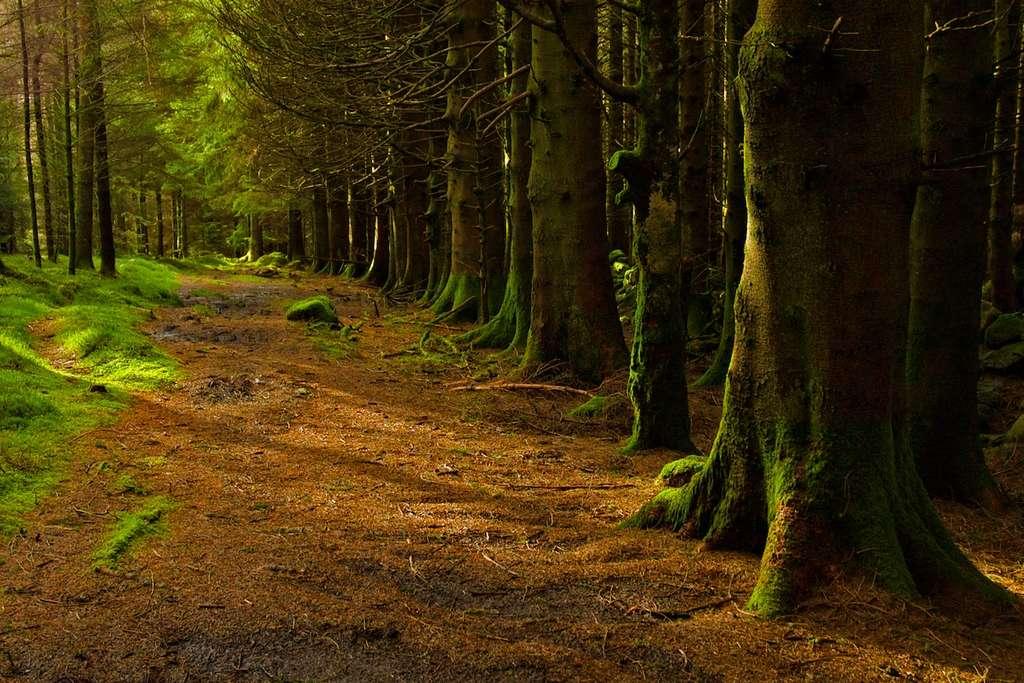 Pays de Galles : forêt de Llyn Crafnant