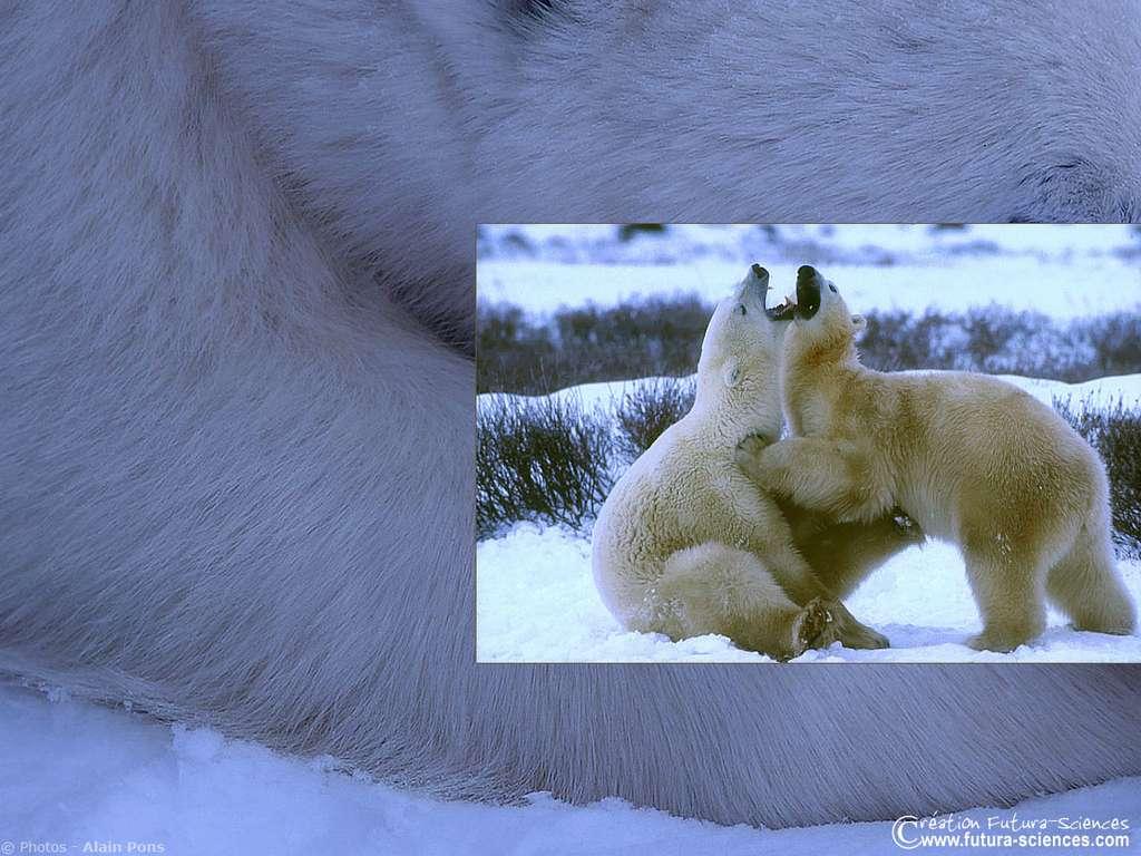 Danse de l'ours