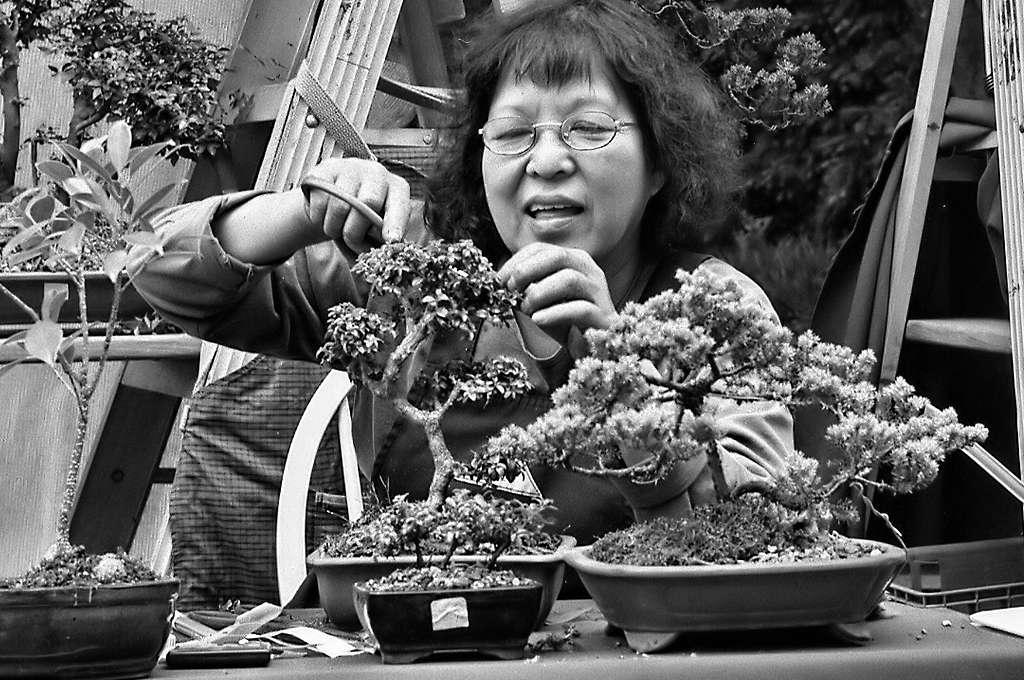 Effeuillage et taille de bonsaïs. © Rob Holland, CC by-nc 2.0