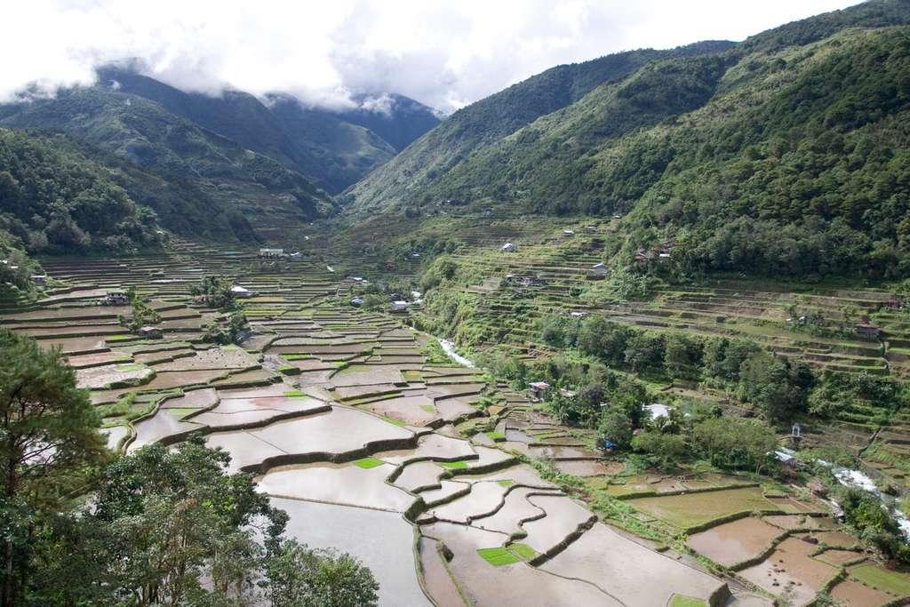 Ces rizières en terrasse constituent des chefs-d'œuvre esthétiques d'art paysan. Mais l'eau qui s'y trouve est parfois riche en arsenic, et imbibe donc les plantes qui poussent. © kin0be, Fotopedia, cc by 2.0