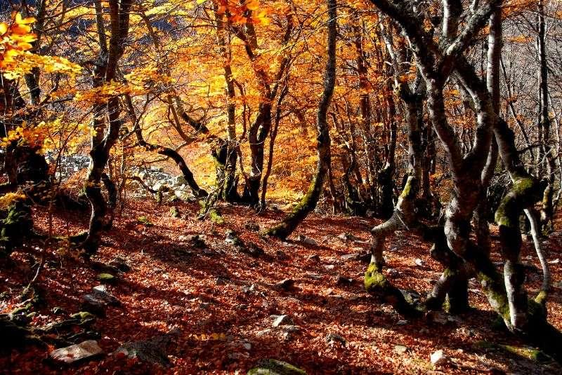 Forêt en Espagne