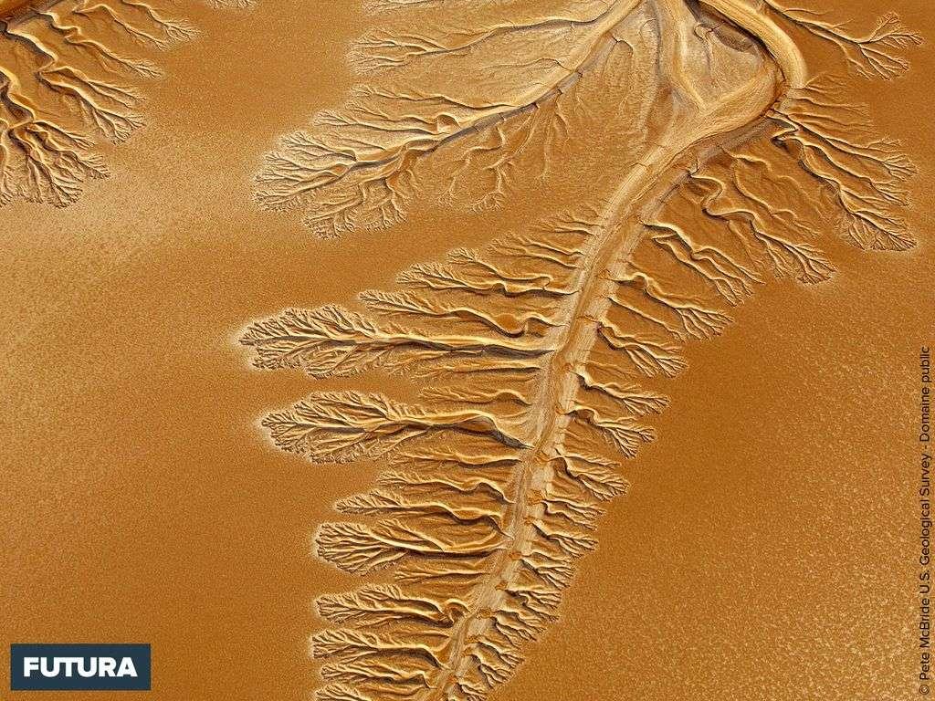 Delta de la rivière Colorado dans le désert de Sonora