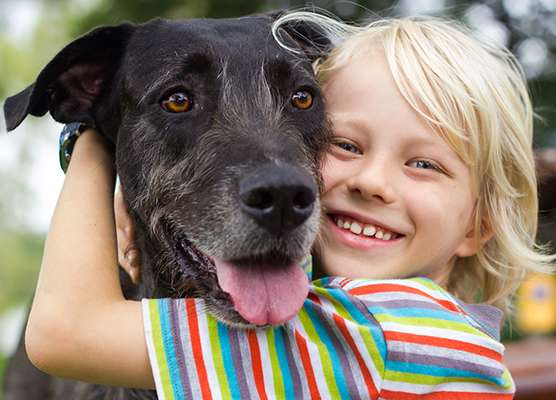 Chez les chiens, des variations de deux gènes (GTF2I et GTF2IRD1) paraissent être à l'origine de leur hyper-sociabilité, un facteur clé de leur domestication qui les distingue des loups dont ils descendent. © MelleVaroy, Istock.com