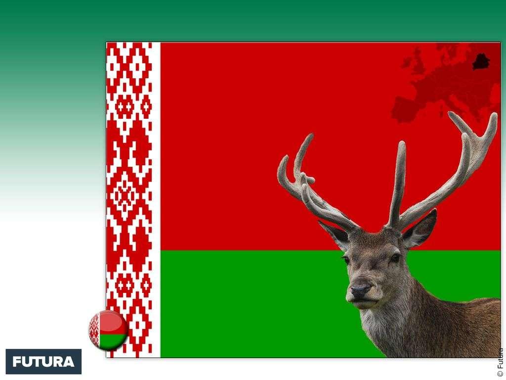 Drapeau : Biélorussie