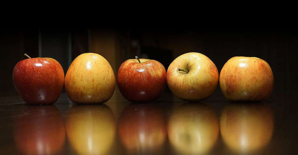 On peut utiliser différentes espèces de pommes pour faire du cidre. © Joseph Monter, Pixabay, DP