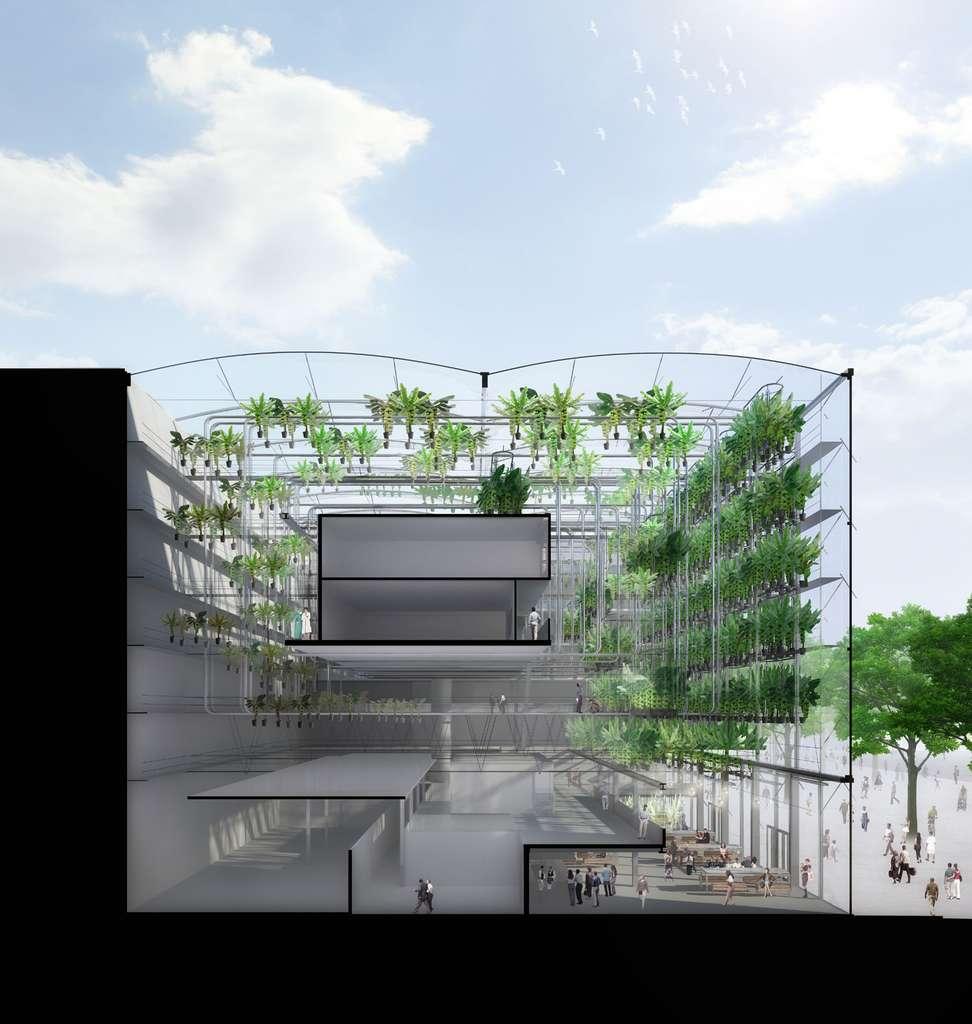 La ferme urbaine Urbanana vue en coupe