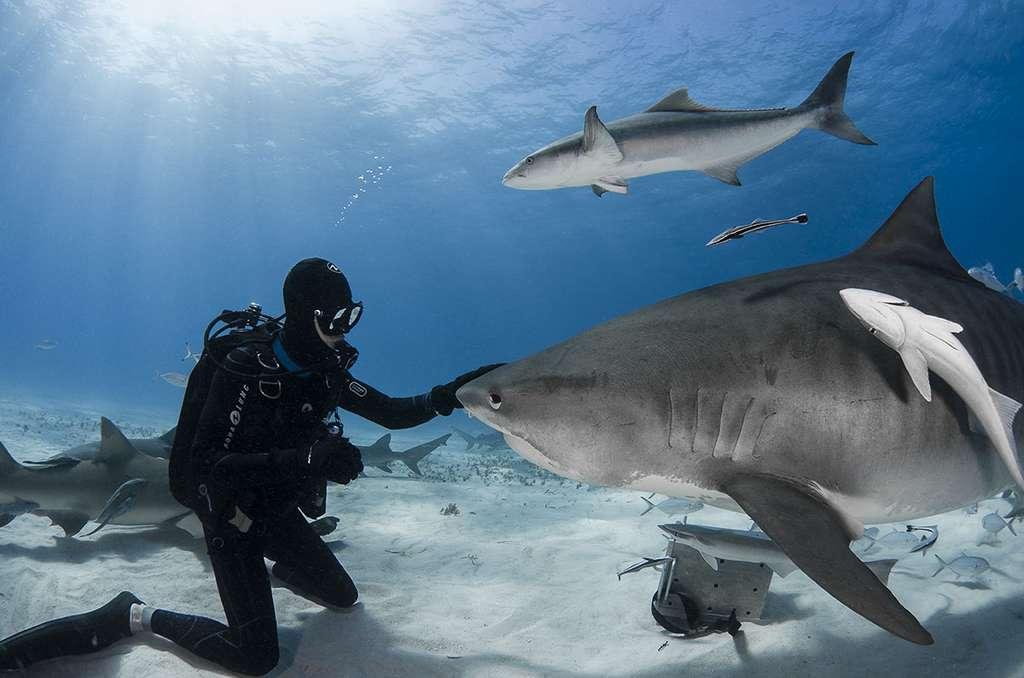 La peur du requin ? Une psychose non fondée. © Greg Lecoeur , tous droits réservés