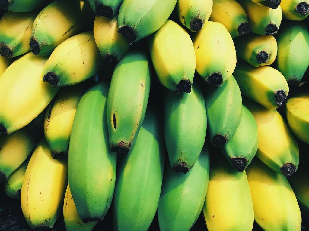Les bananes sont cueillies vertes et mûrissent à leur arrivée en Europe. © Scott Webb, Unsplash