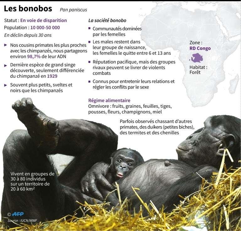 Quelques informations sur les bonobos. © John Saeki - AFP