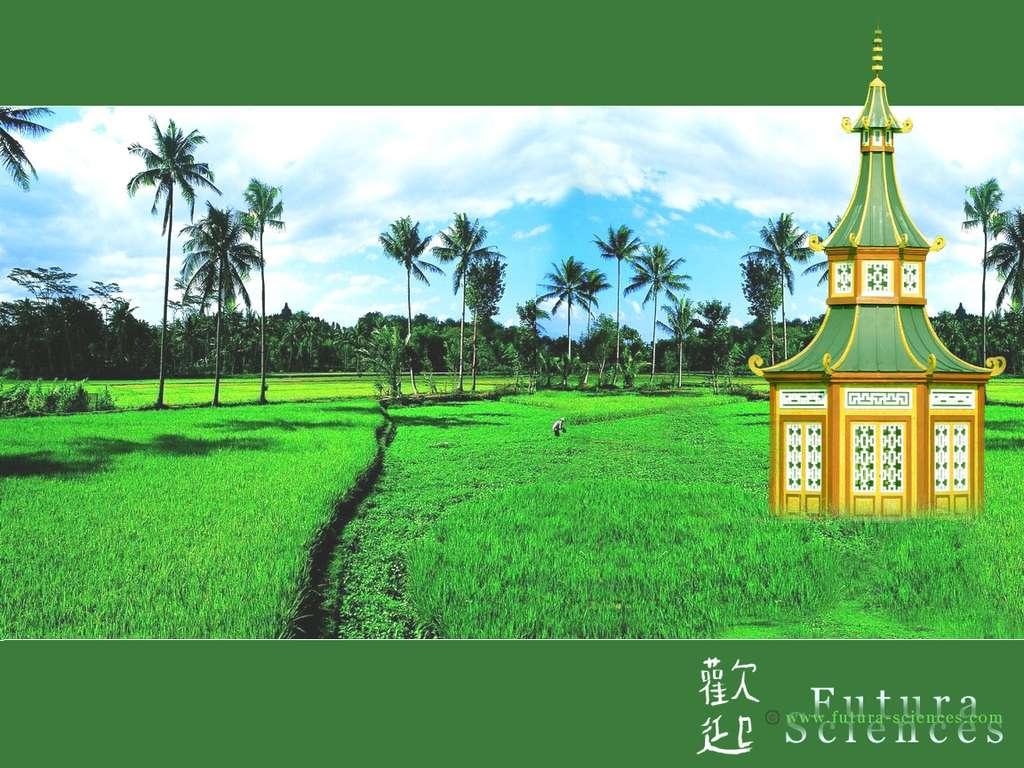 Pagode et rizières