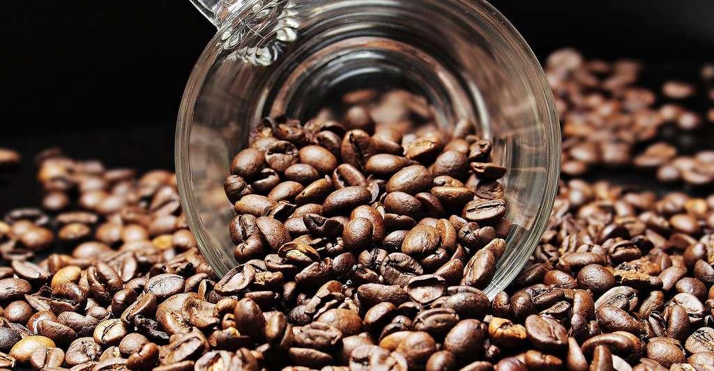 Grains de café bio. © pixel2013, Pixabay, DP