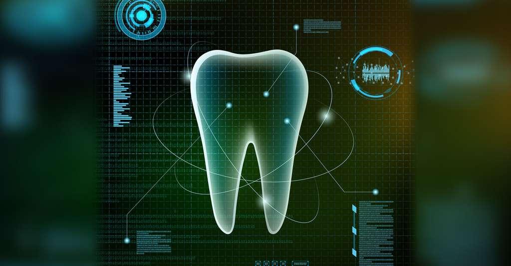 Anatomie de la dent. © Macro-Vectors, Shutterstock