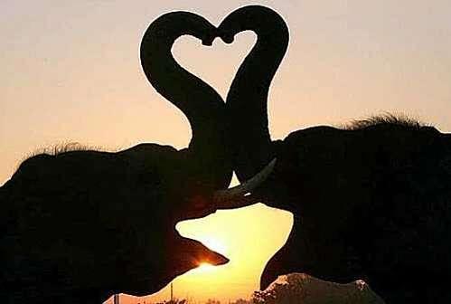 Un amour d'éléphants