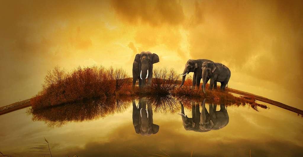 Troupeau d'éléphants au soleil couchant. © Coffy - Domaine public