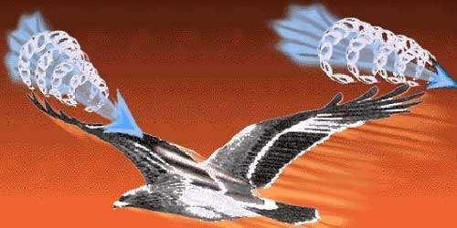 Digitation des rémiges et petits tourbillons. © Reproduction et utilisation interdites