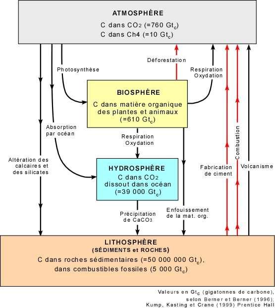Cycle global du carbone, incluant la photosynthèse. © Université Laval