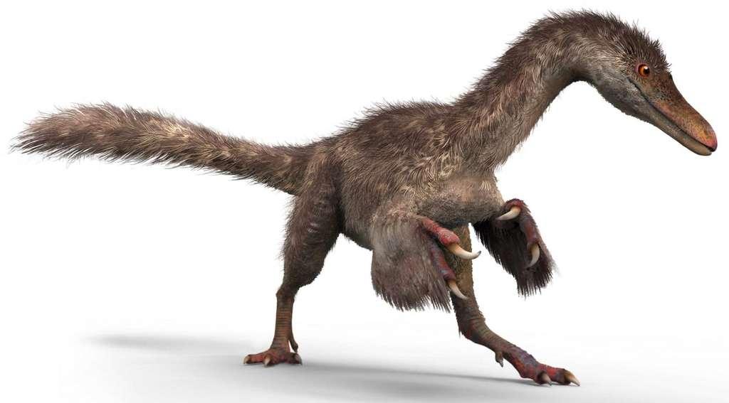 Une représentation possible d'un coelaosaure, petit dinosaure du Crétacé qui n'appartient pas à la lignée ayant conduit aux oiseaux. Mais il avait déjà un joli plumage. © Chung-tat Cheung et Yi Liu