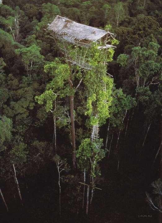 Une cabane... en haut dans les arbres !