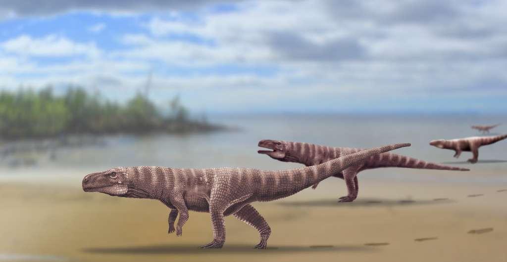 Une vue d'artiste des crocodiles bipèdes baptisés Batrachopus grandis à l'origine des traces de pas fossiles trouvées en Corée du Sud. © Anthony Romilio.