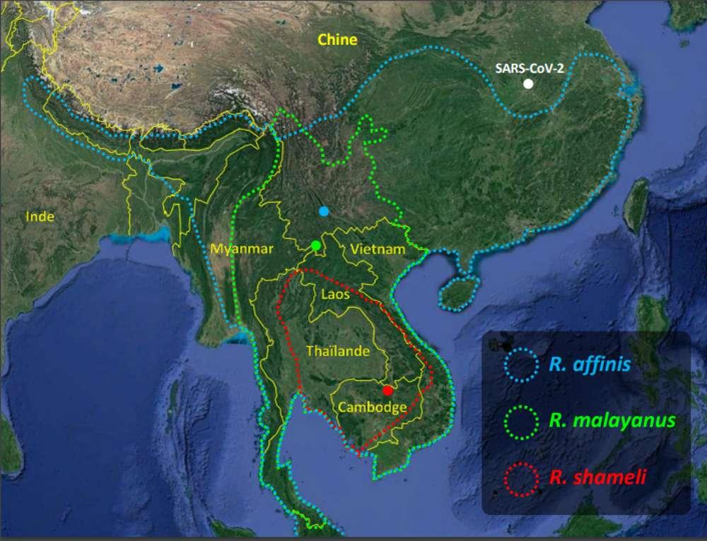 Distribution géographique des trois espèces de chauves-souris chez lesquelles des virus proches du SARS-CoV-2 ont été séquencés. Les points colorés indiquent les localités d'origine des virus RaTG13 (bleu), RmYN02 (vert), RshSTT182 et RshSTT200 (rouge). © Alexandre Hassanin, iucnredlist.org